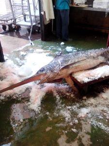 swordfish Jerez market
